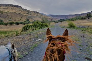 טיולי סוסים בכנרת